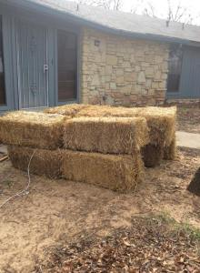 A friend of my daughters helped me get my straw bales. Oklahoma people are so friendly and helpful. I love them!